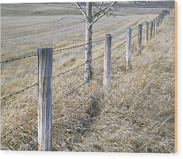 Fenceline And Cropland In Late Fall Wood Print by Darwin Wiggett