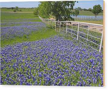Wood Print featuring the photograph Fenceline Flowers by Lynnette Johns