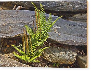 Fern And Rocks Wood Print by Susan Leggett
