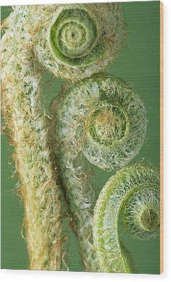 Fern Fronds Wood Print by David Aubrey