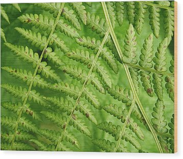 Fern Green Wood Print