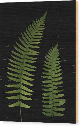 Fern Leaves With Water Droplets Wood Print by Deddeda