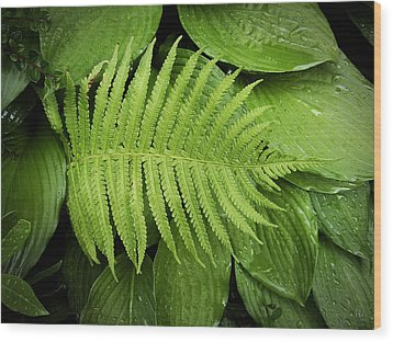 Fern On Top Wood Print by Nafets Nuarb
