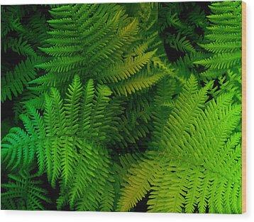 Fern Wood Print by Shweta Singh