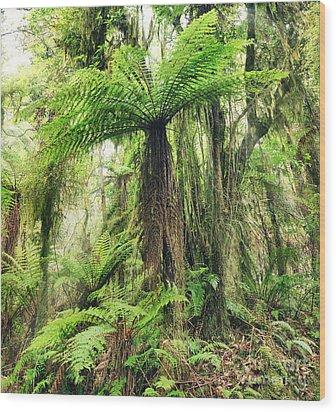 Fern Tree Wood Print by MotHaiBaPhoto Prints