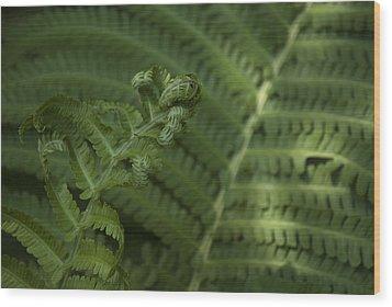 Fern Unfolding Wood Print