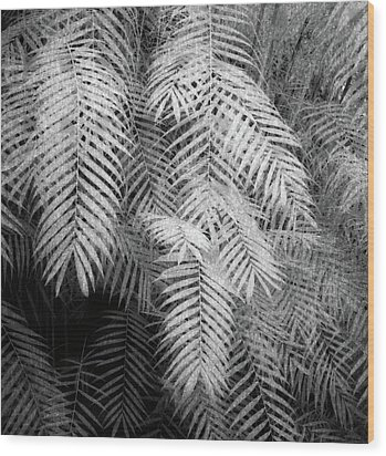 Fern Variations In Infrared Wood Print by Andreina Schoeberlein