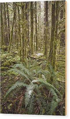 Ferns Sit On The Forest Floor Wood Print by Taylor S. Kennedy