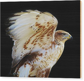 Ferruginous Hawk Wood Print by Paulette Thomas