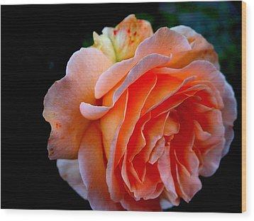 Feuerrose Wood Print by Photo by Ela2007