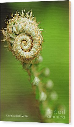 Fiddlehead Wood Print by Tonia Noelle
