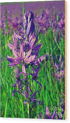 Wood Print featuring the photograph Field Of Camas In Oregon by Mindy Bench