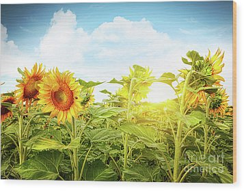 Field Of Colorful Sunflowers And Blue Sky  Wood Print by Sandra Cunningham