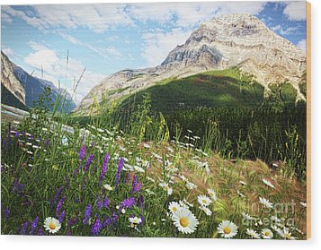 Field Of Daisies And Wild Flowers Wood Print by Sandra Cunningham