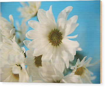 Field Of Daisies Wood Print by Mary Broughton