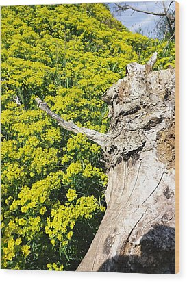 Wood Print featuring the photograph Field Of Flowers 1 by Gerald Strine