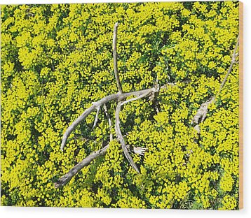 Wood Print featuring the photograph Field Of Flowers 3 by Gerald Strine