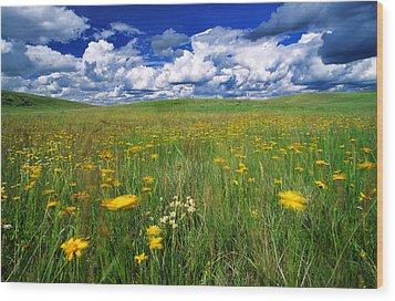 Field Of Flowers, Grasslands National Wood Print by Robert Postma