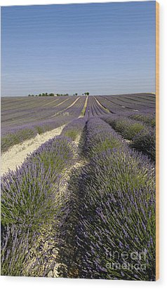 Field Of Lavender. Valensole. Provence Wood Print by Bernard Jaubert