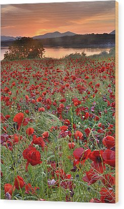 Field Of Poppies Wood Print by Guido Montanes Castillo