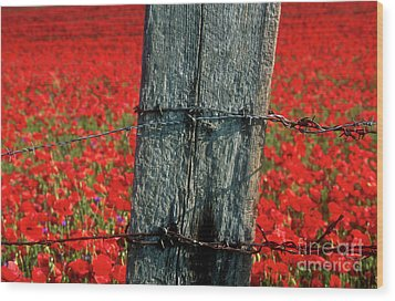 Field Of Poppies With A Wooden Post. Wood Print by Bernard Jaubert