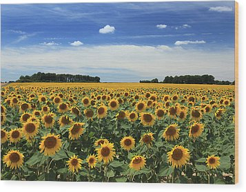 Field Of Sunflowers France Wood Print by Pauline Cutler