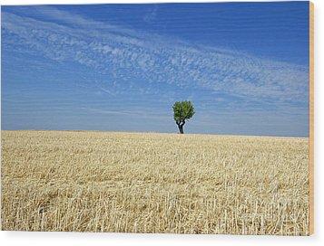 Field Of Wheat In Provence Wood Print by Bernard Jaubert
