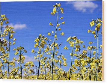 Wood Print featuring the photograph Field Of Yellow Mustard Flowers by Alexandra Jordankova