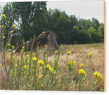 Field Of Yellow Sage In Lakewood Colorado Wood Print by Gretchen Wrede
