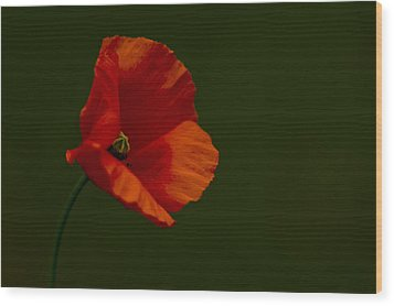 Wood Print featuring the photograph Field Poppy by Rob Hemphill