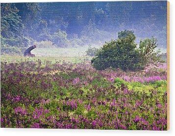 Field With Purple Flowers Wood Print by Brian Lee