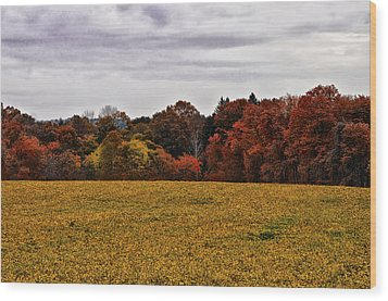 Fields Of Gold Wood Print by Bill Cannon