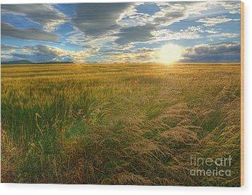 Fields Of Gold Wood Print by John Kelly