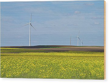Fields Of Gold Wood Print by Straublund Photography