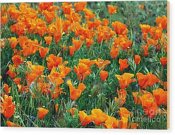 Wood Print featuring the photograph Fields Of Poppies by Johanne Peale