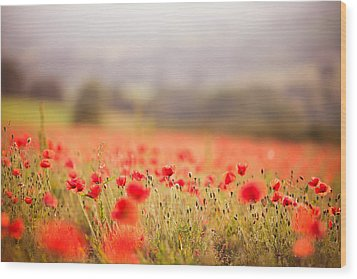 Fields Of Wild Poppies Wood Print by Olivia Bell Photography