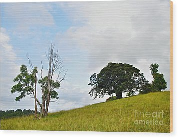 Fig Tree On A Hill Wood Print by Kaye Menner