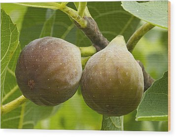 Wood Print featuring the photograph Figs by Carrie Cranwill