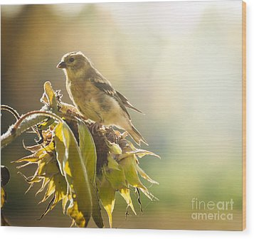 Finch Aglow Wood Print by Cheryl Baxter