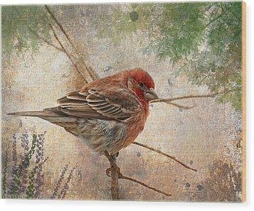Finch Art Or Greeting Card Blank Wood Print by Debbie Portwood
