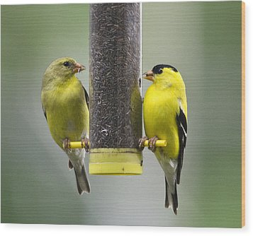 Finch Couple Wood Print