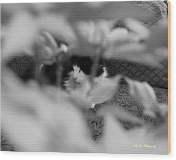 Find The Kitty Wood Print by Jeanette C Landstrom