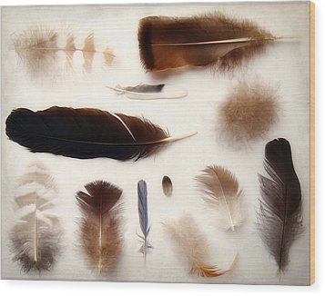 Finding Feathers Wood Print