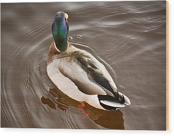 Wood Print featuring the photograph Fine Feathered Mallard Duck by Ann Murphy