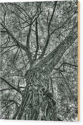 Finkles Landing Tree Wood Print