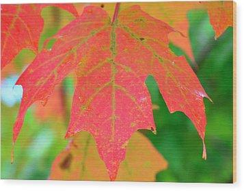 Fire Leaf Wood Print by Mandi Howard