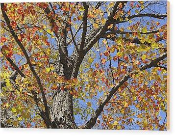 Fire Maple Wood Print by Luke Moore
