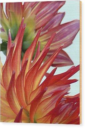 Firecracker Dahlia Wood Print by Pamela Patch