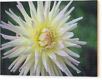 Wood Print featuring the photograph Firecracker Mum by Amee Cave