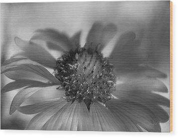 Wood Print featuring the photograph Firewheel In Mono by Vicki Pelham